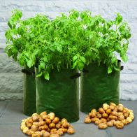 See more information about the 3 Pack of Patio Potato Planters