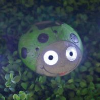 See more information about the Bright Garden Ladybug Solar Lights - Green