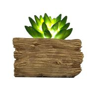 See more information about the Bright Garden Succulent Solar Light - Small Green Leaves