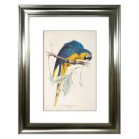 See more information about the Tropical Birds Parrot Framed Print Wall Art 16 x 12 Inch