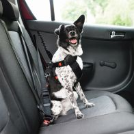 See more information about the Scallywags Dog Seatbelt Car Harness