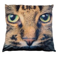 See more information about the Photographic Animal Cushion 45 x 45cm (Tabby Cat)
