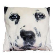 See more information about the Photographic Animal Cushion 45 x 45cm (Dalmatian)
