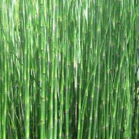 See more information about the Anglo Aquatics Equisetum Hyemale 1 Litre
