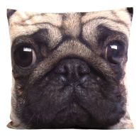 See more information about the Photographic Animal Cushion 45 x 45cm (Pug Dog)