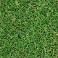 See more information about the Premium Outdoor Garden Lawn Turf 60 Square Metres